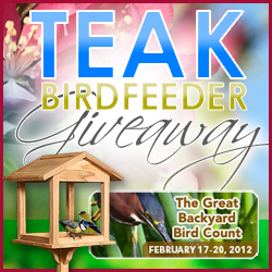 Teak Birdfeeder Giveaway