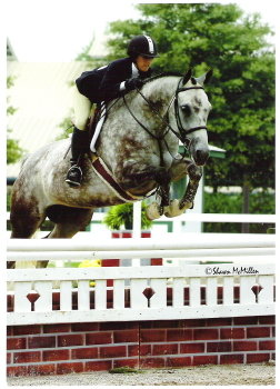 alabama horse shows, horse shows, hunter jumper shows, hunter horse, hunter shows, hunter jumping