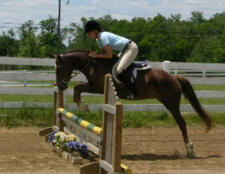 alabama horse shows, horse shows, hunter shows, hunter jumper shows, hunter horse
