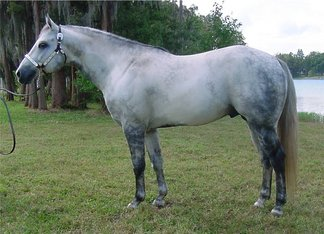 alabama horse shows, alabama quarter horse shows, horse shows, american quarter horse
