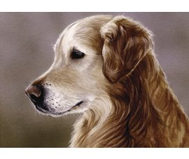 Golden Retriever, dog note cards, Golden Retriever portrait, equestrian note cards, equestrian acces